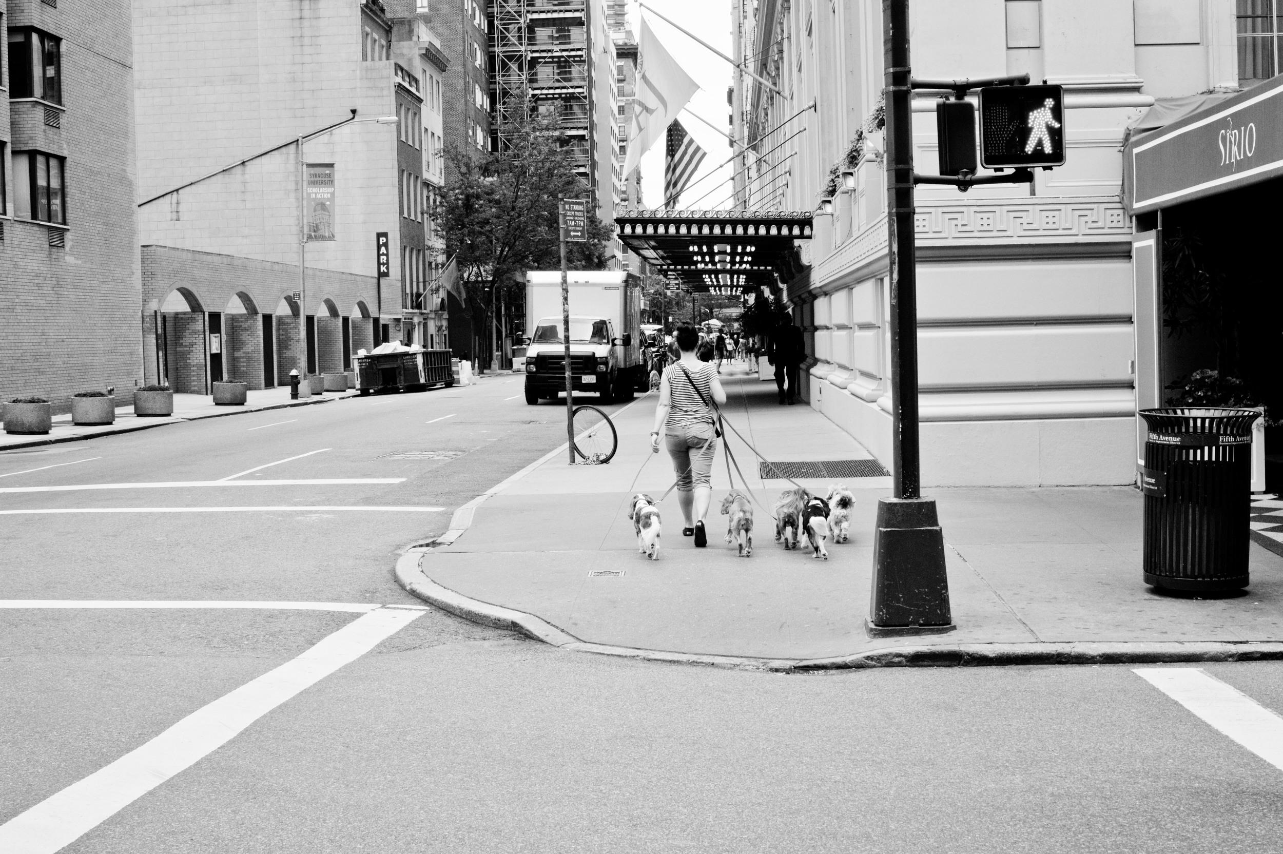 Manhattan dog photographer