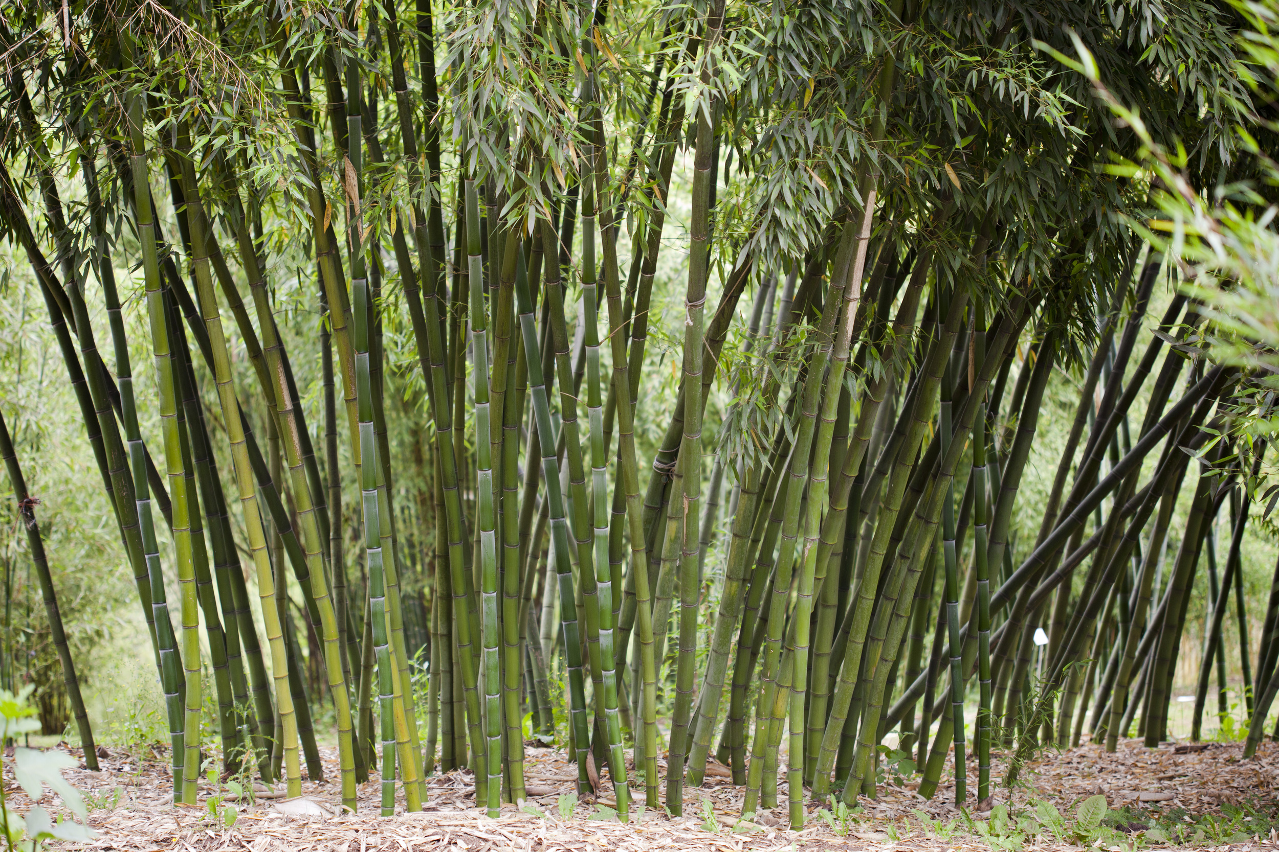 mind-your-own-bamboo.jpg
