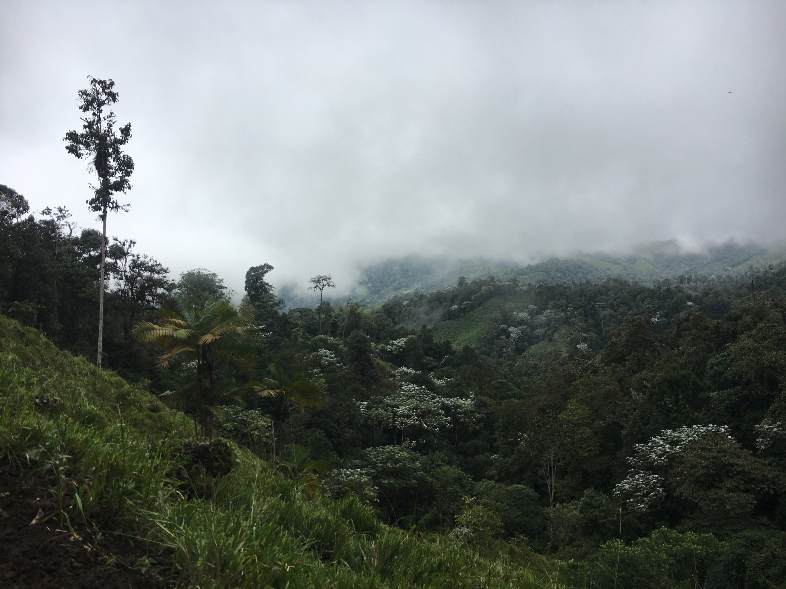 The Cloud Forest (Photo Credit: Carpe Diem)