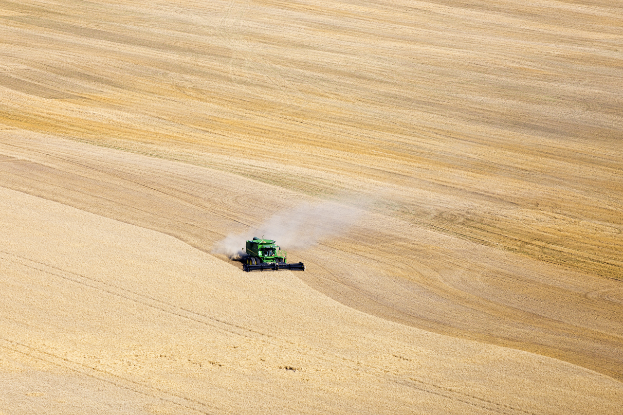 A combine harvests wheat in rural Hutchinson, Kansas.