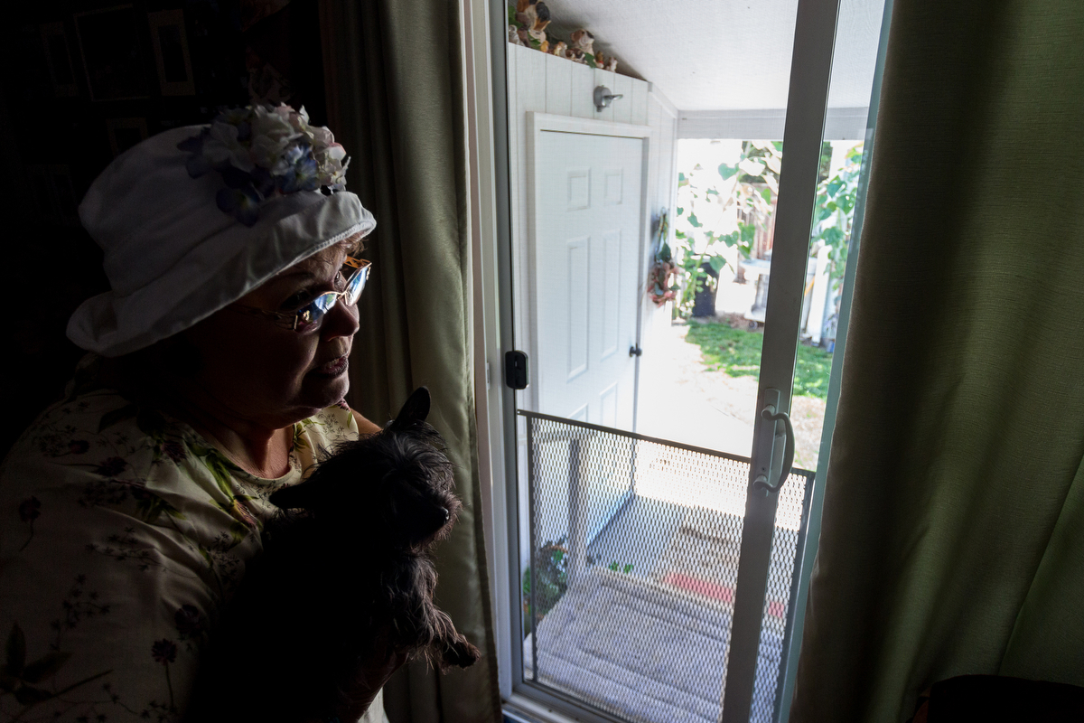 Penny Inglis shows how a raccoon broke through her bedroom screen door and attacked her two dogs Hazle, pictured and Gus on Thursday, July 30, 2015.