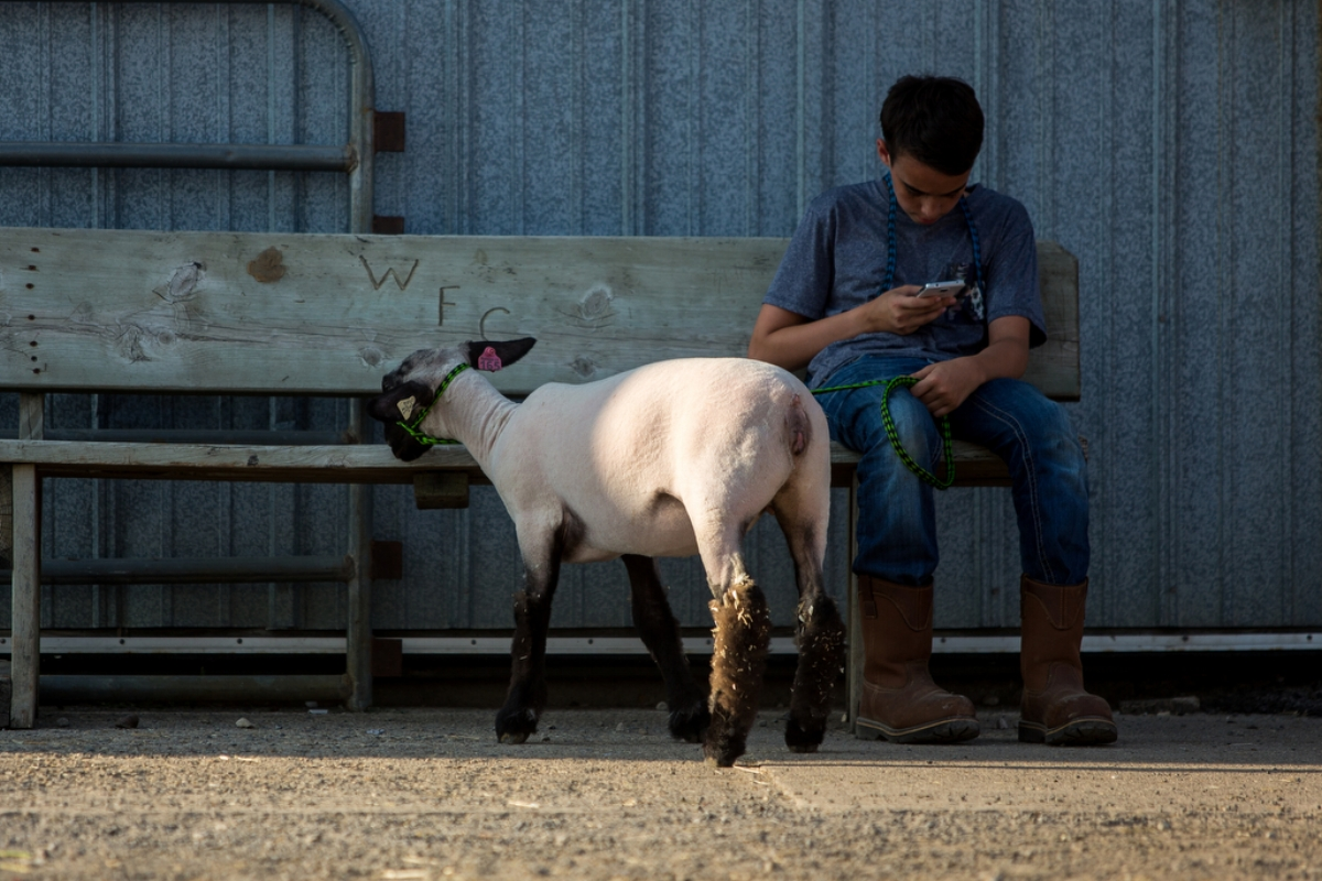 Parker Tungate, 15, sits with his lamb during the 2017 Washtenaw 4-H Youth Show at the Washtenaw Farm Council Grounds on Thursday, July 27, 2017. The show ran from July 22-28. Matt Weigand | The Ann Arbor News