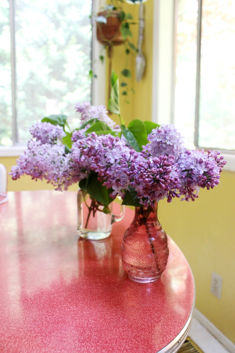 Fresh cut lilacs from my garden adorning my kitchen table.
