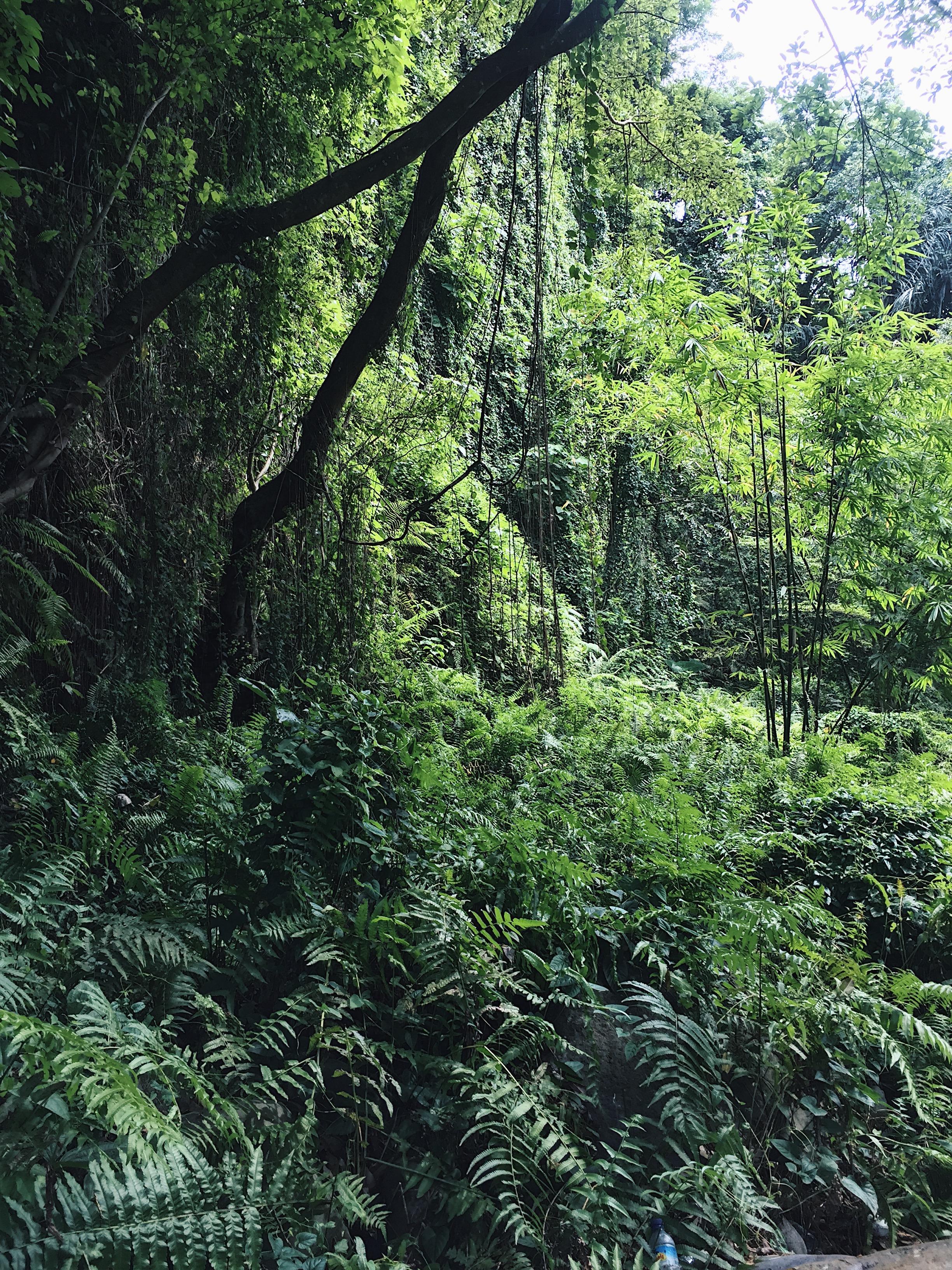 Exploring Lombok Jungle