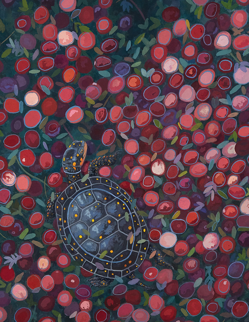Spotted Turtle & Cranberries