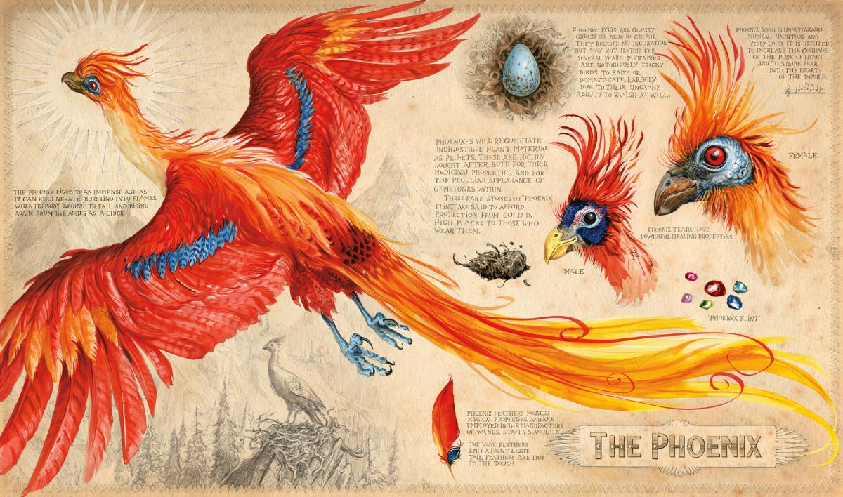 HP2_Phoenix_.jpg