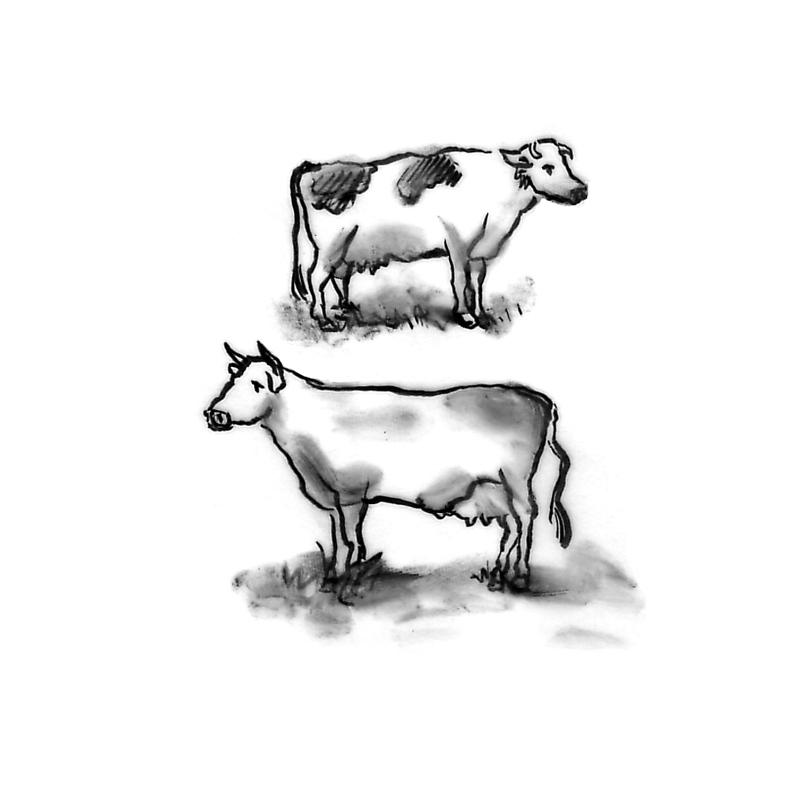 BUFFALOsketch_cows.jpg