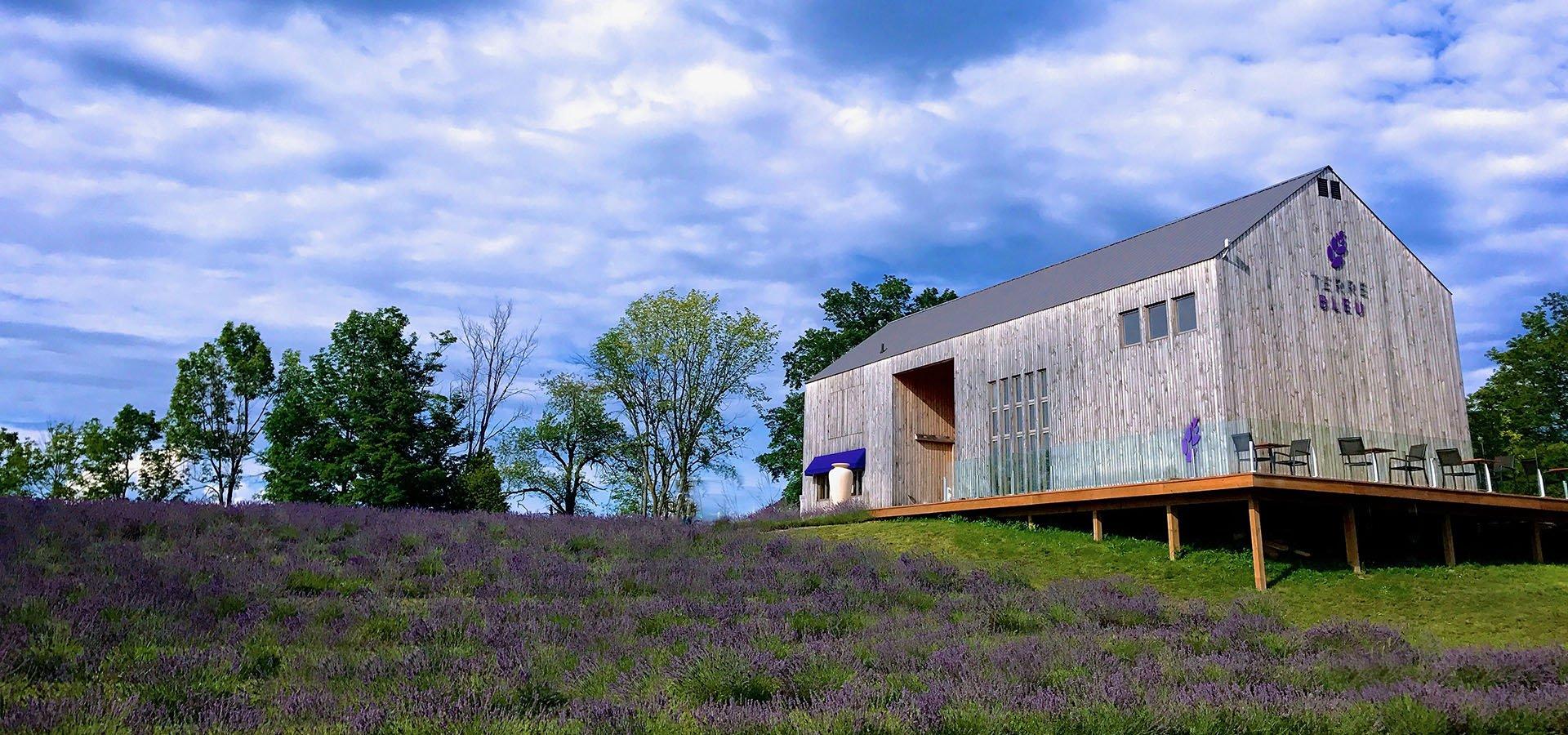 Terre_Bleu_Lavender_Farm_Field_and_Store.jpg