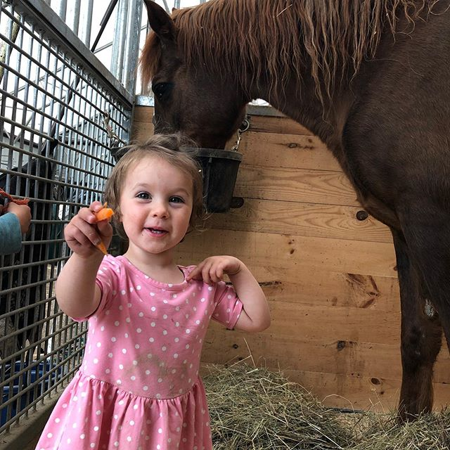 Honey gets all the @bumblerootorganicfarm carrots on her 30th birthday 💕💕💕 #morganhorse #horse #birthday #farmkids