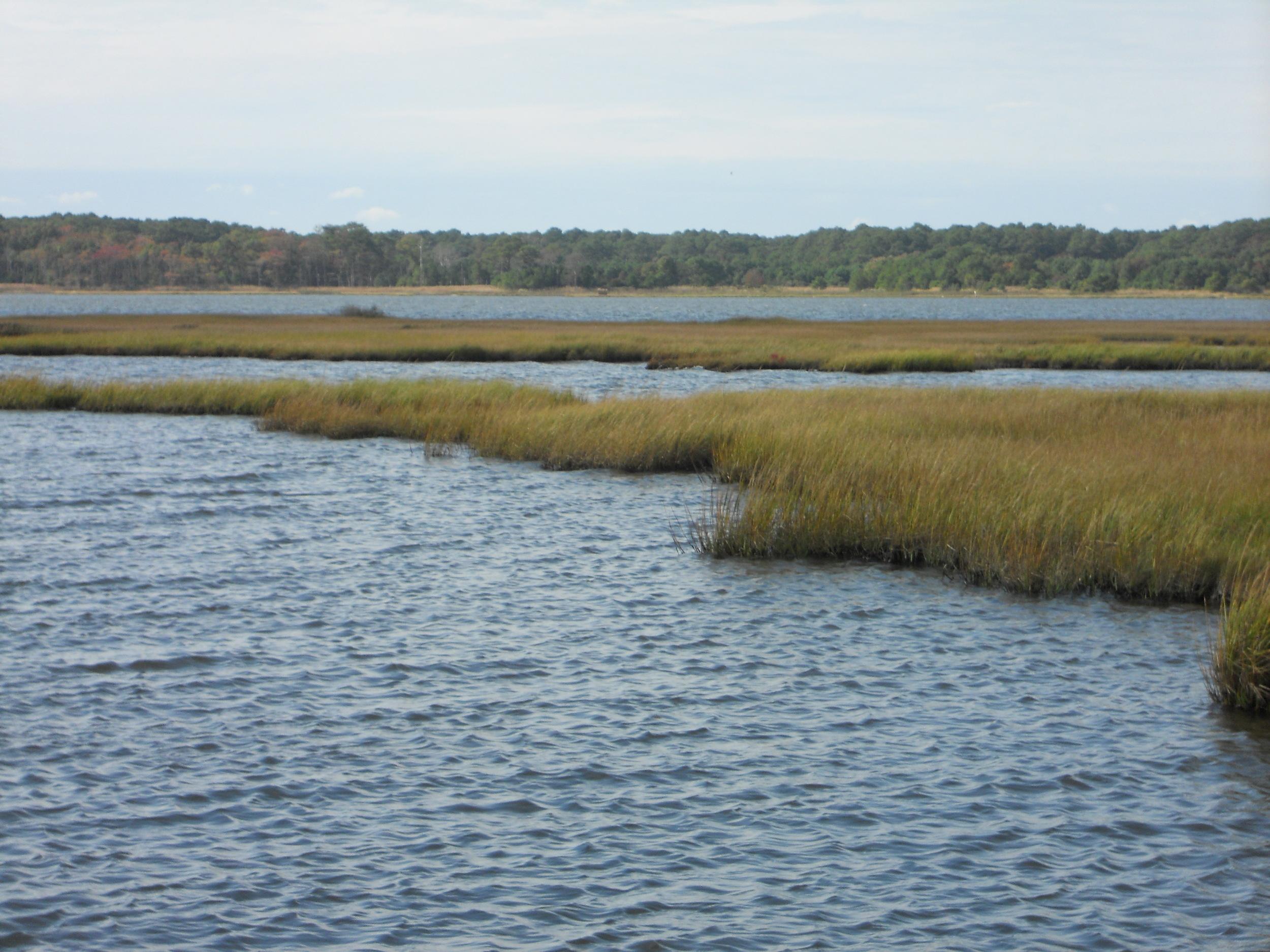 Bay grasses, horiz.JPG