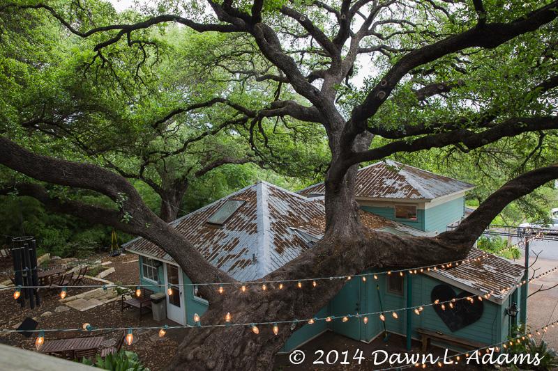 Austin - Sanctuary-2.JPG