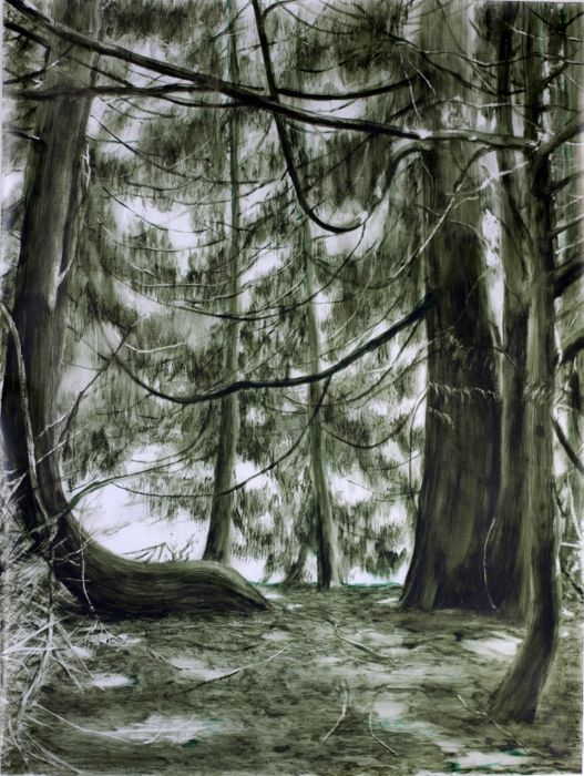 Chamberlain,Great Cypress, Patient Observed, 2013.jpg
