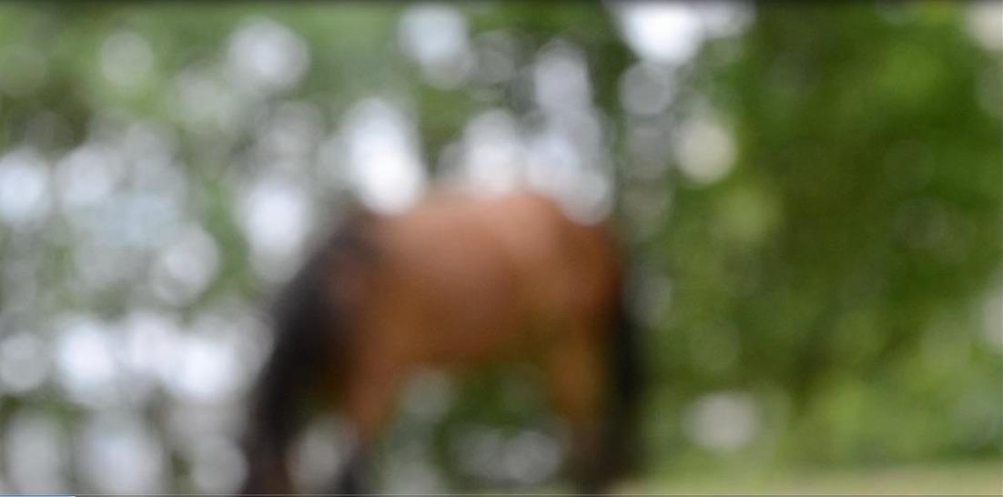 horsefilm.jpg