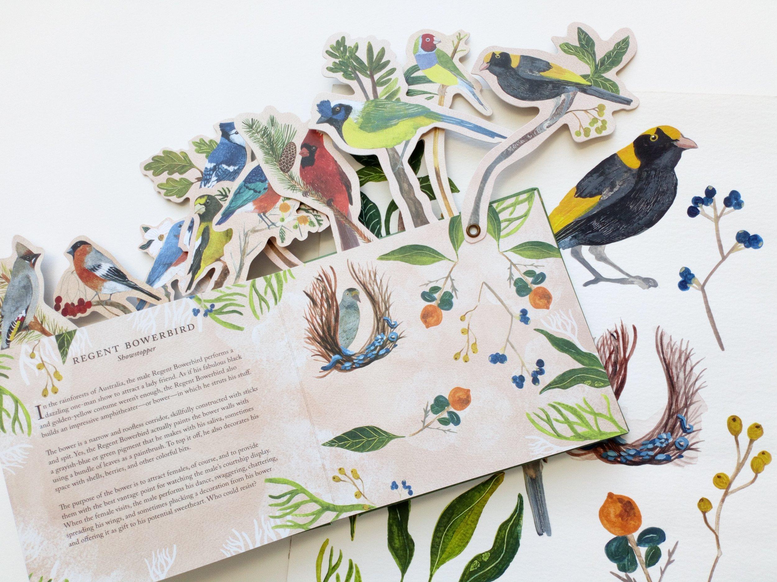 Bird book 9.JPG