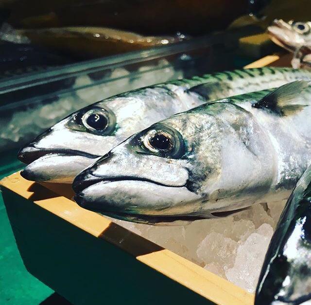 Img Pesky Fish 2 mackarel.jpg