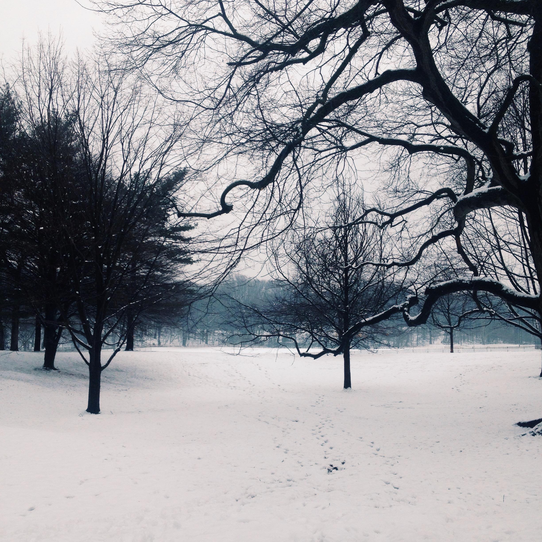 A snowy Prospect Park.