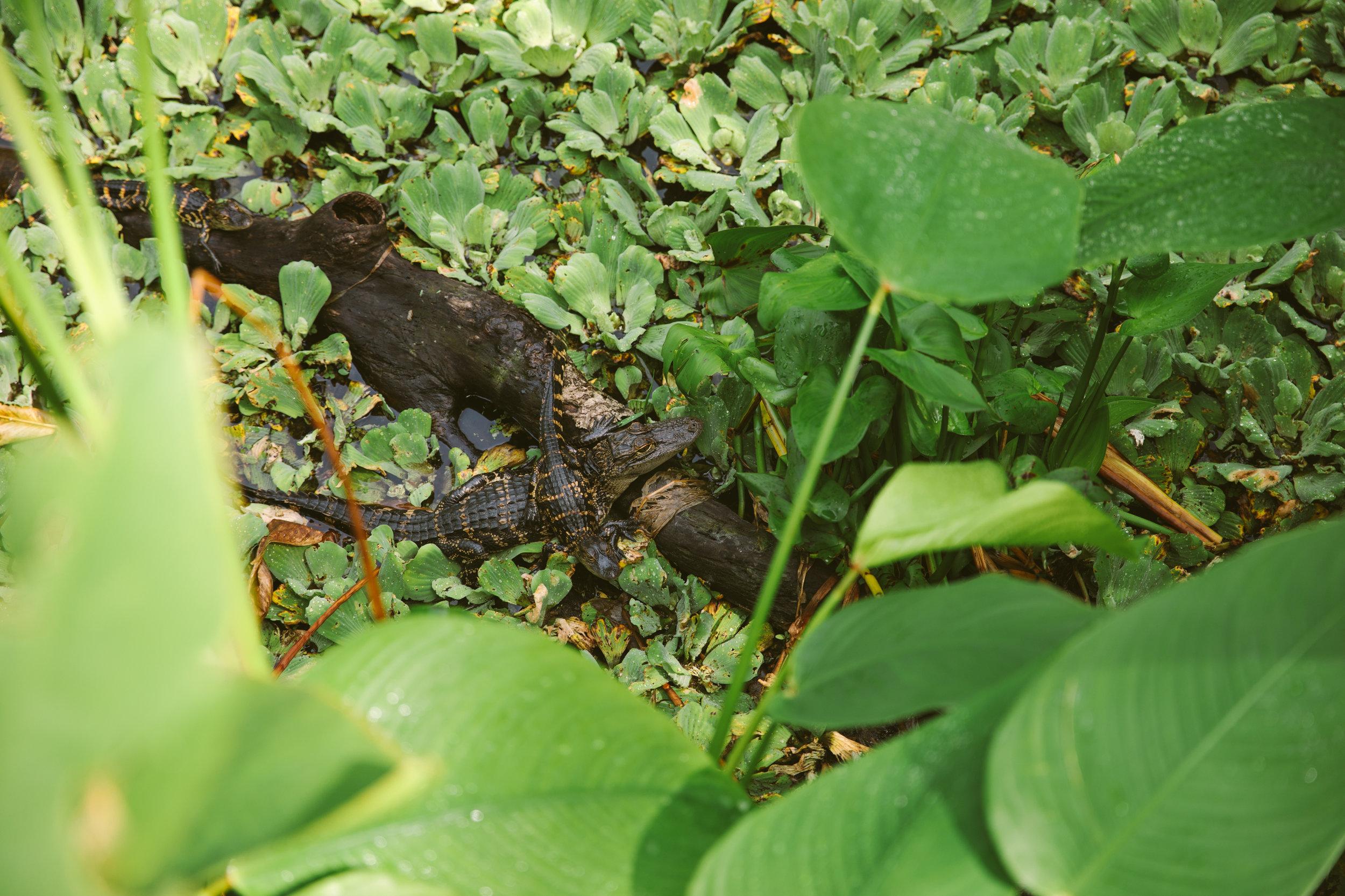 Florida-ElenaPressprich-29.jpg