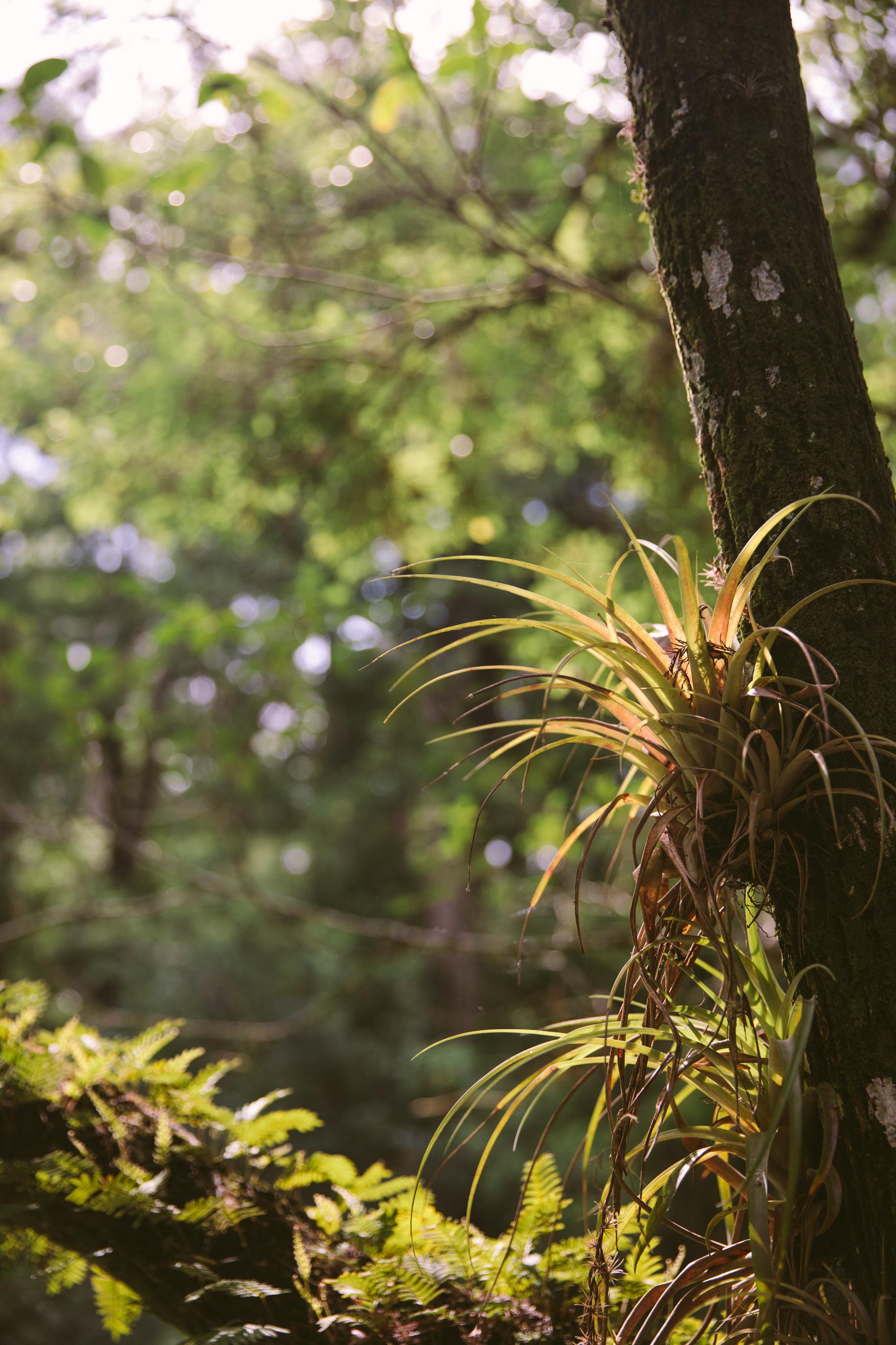 Florida-ElenaPressprich-36.jpg