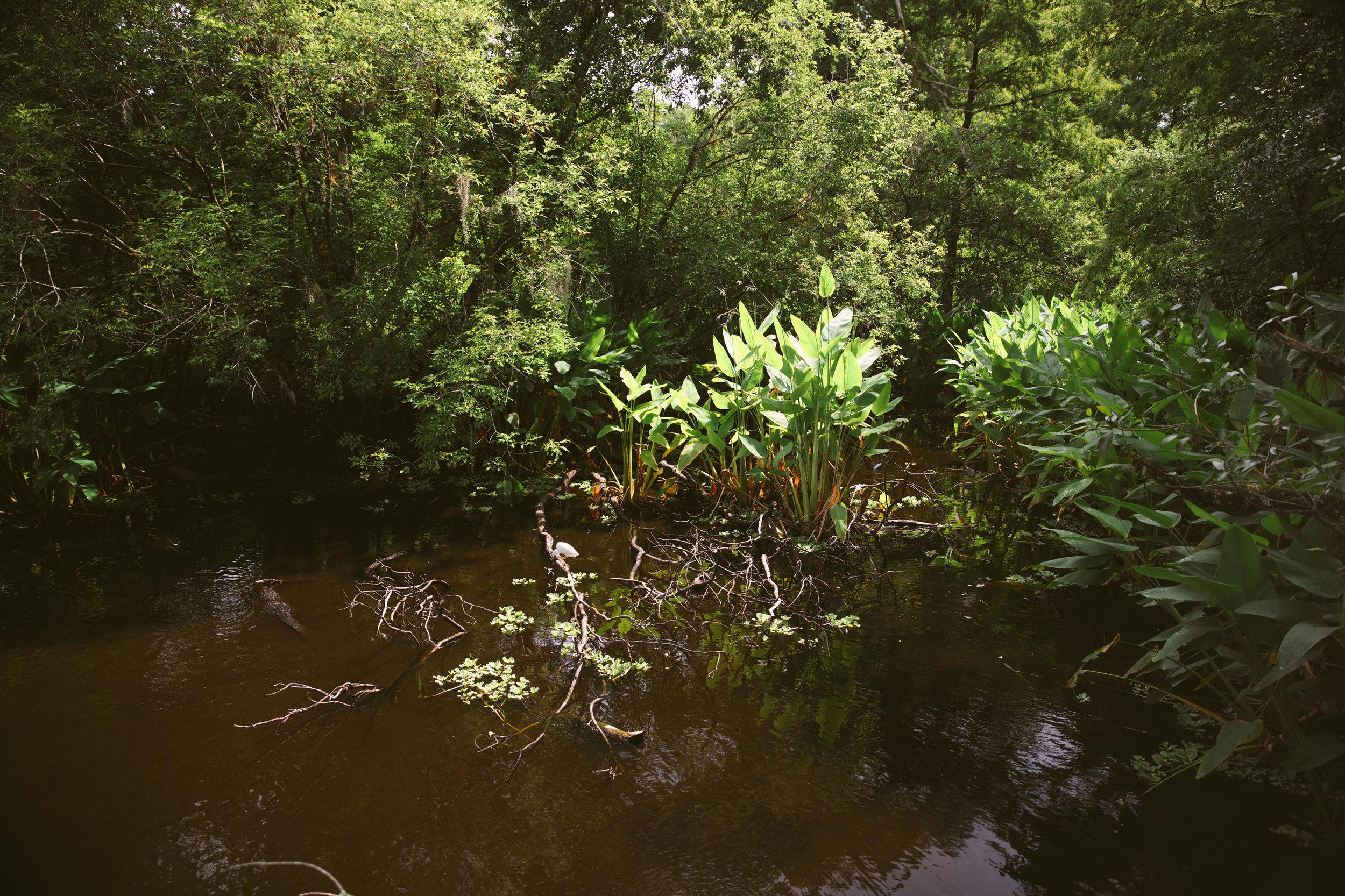 Florida-ElenaPressprich-38.jpg