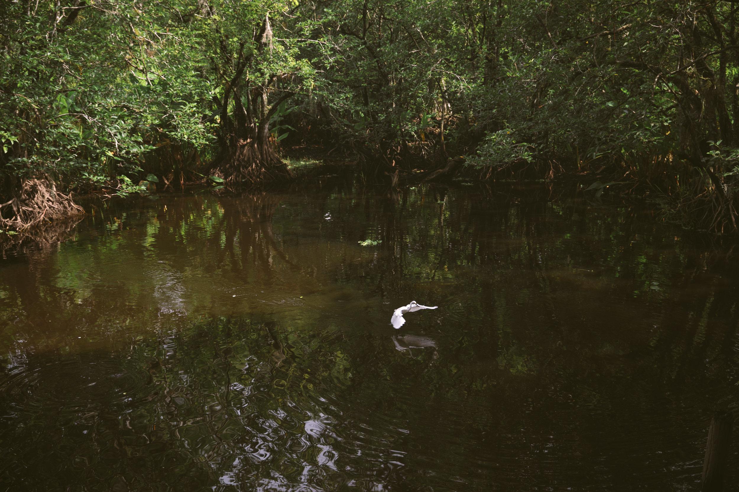 Florida-ElenaPressprich-40.jpg