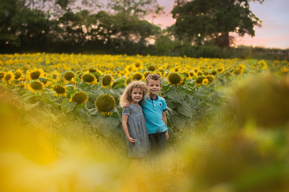 Berkhamsted sunflower Photography.jpg