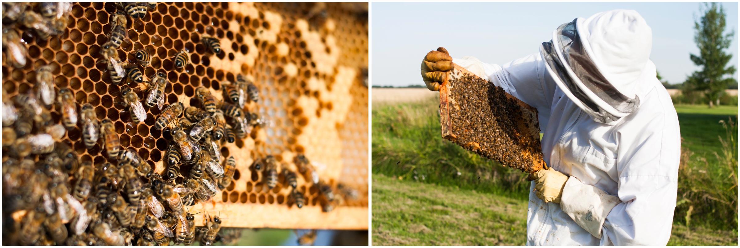 Paul Kirvan Bees_0009.jpg