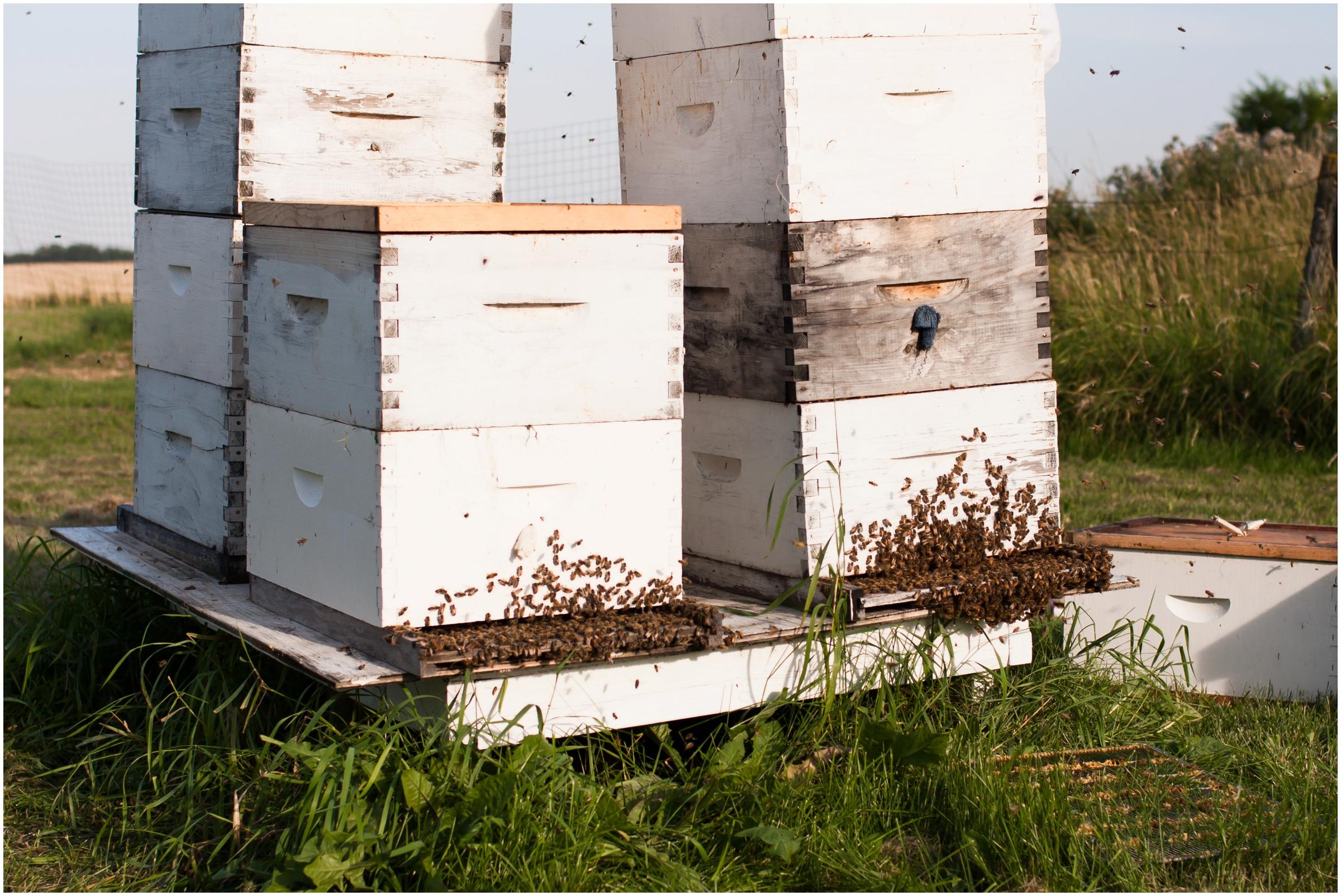 Paul Kirvan Bees_0010.jpg