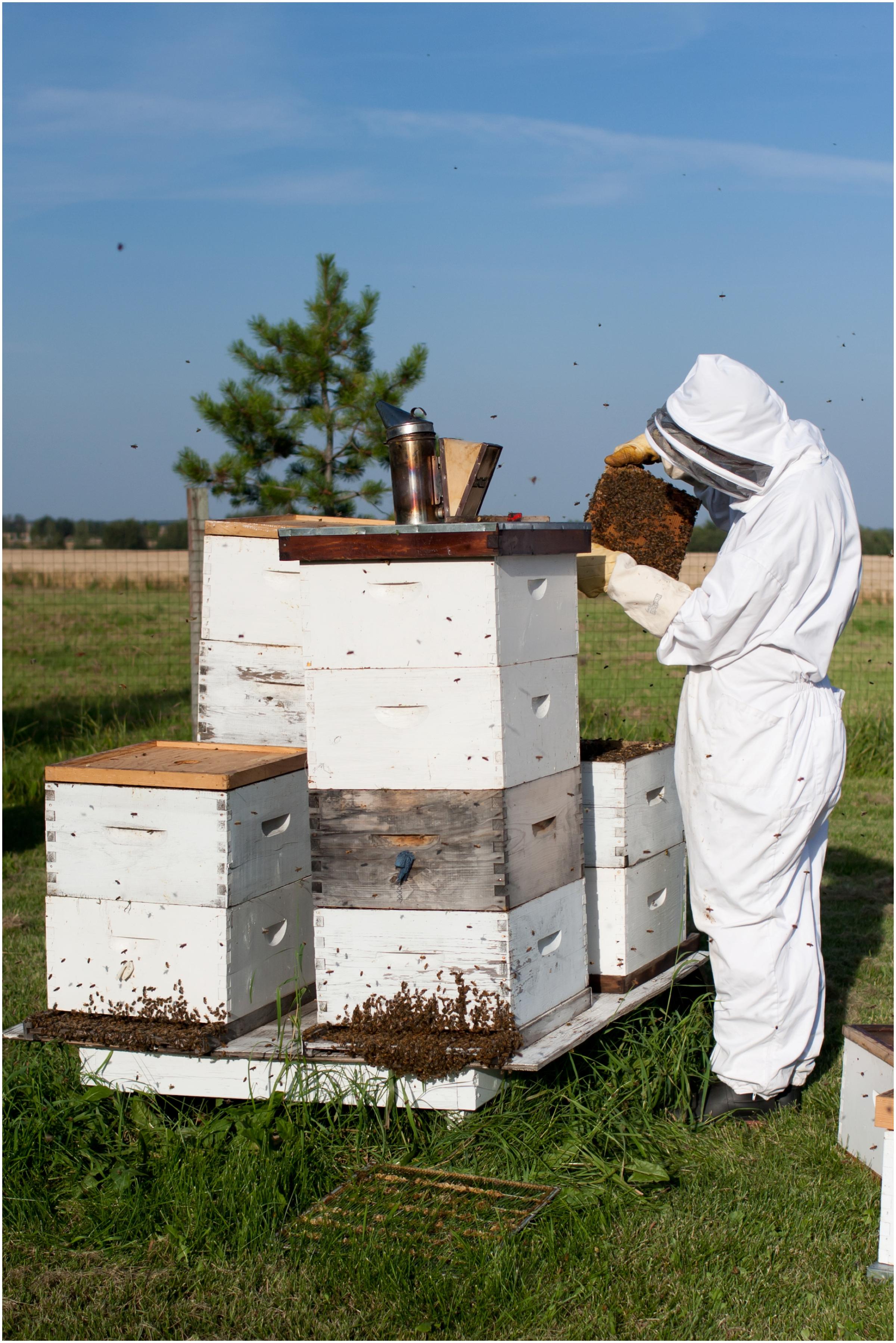 Paul Kirvan Bees_0011.jpg