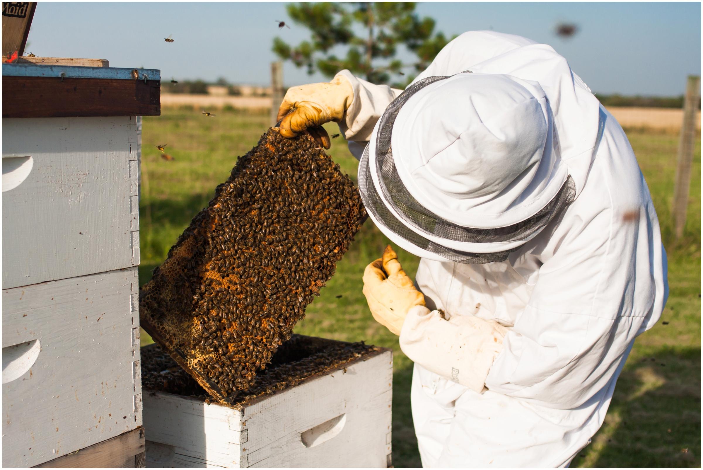 Paul Kirvan Bees_0014.jpg