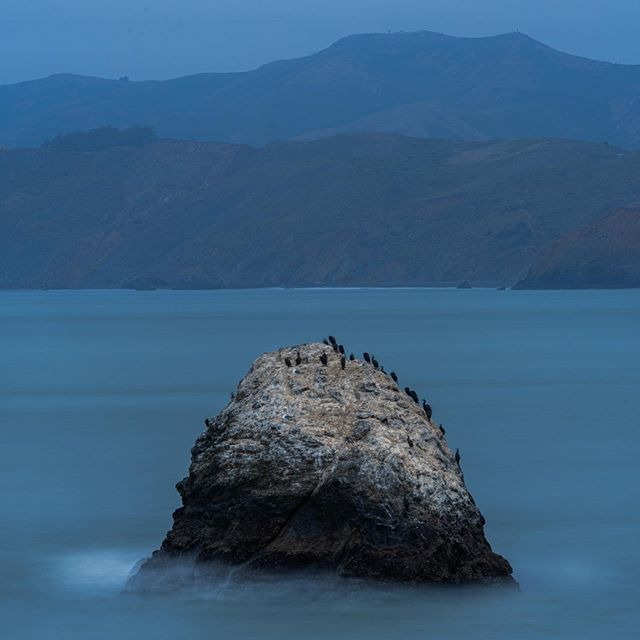 Calm . . . . . . #calm #sea #birds #rock #blue #bluehour #seaside #coast #california #usa #travel #seabirds #resting #roadtrip #holidays #vacation #blau #blauestunde #see #sanfrancisco #sanfran #meer #vögel #ruhe #entspannung #urlaub #fels #hashtag