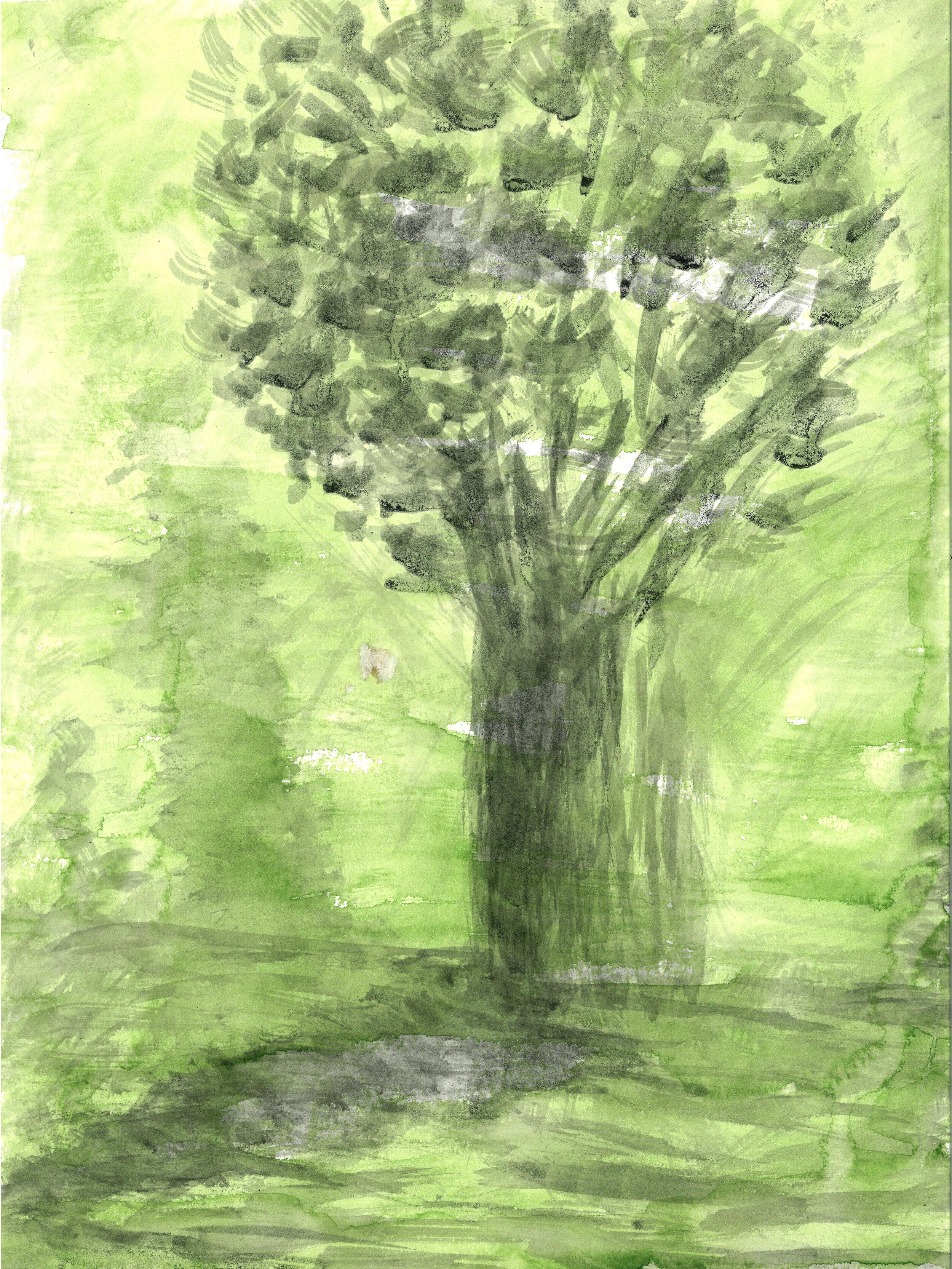 Tree and Shadow.jpg