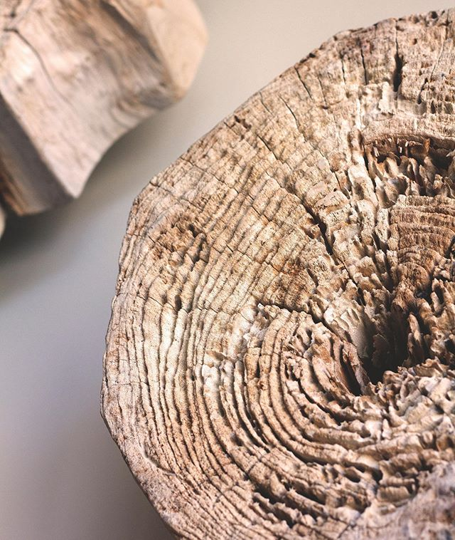 you can tell how old a tree is by how many rings are around the stump! Come see our timeless pieces for your home 🌳  #loveyoursurroundings