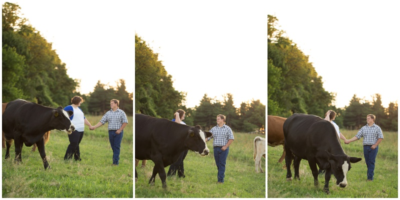 ...and of course we can't forget about photobomb cow!
