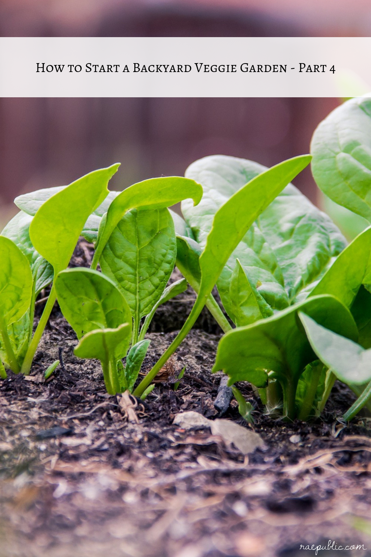 How to Start a Veggie Garden - Part 4
