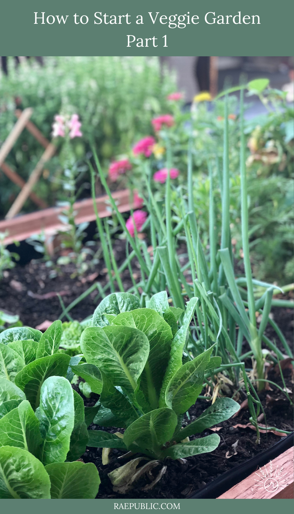 Wondering how to start your own backyard vegetable garden? This is the place to start. Make sure to check out part 2, 3, and 4 too.