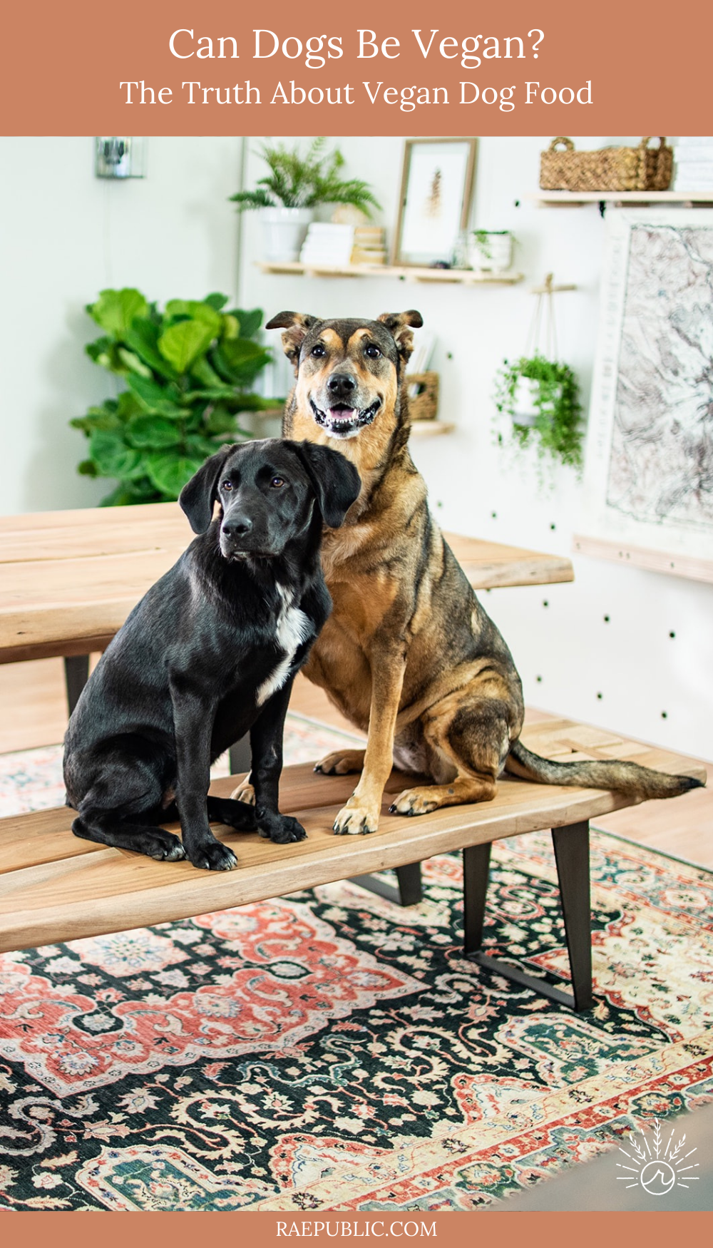 Can dogs be vegan? This blog post covers everything related to dog nutrition and if they can actually thrive on a plant-based diet. Want to learn the truth about vegan dog food? Read on.