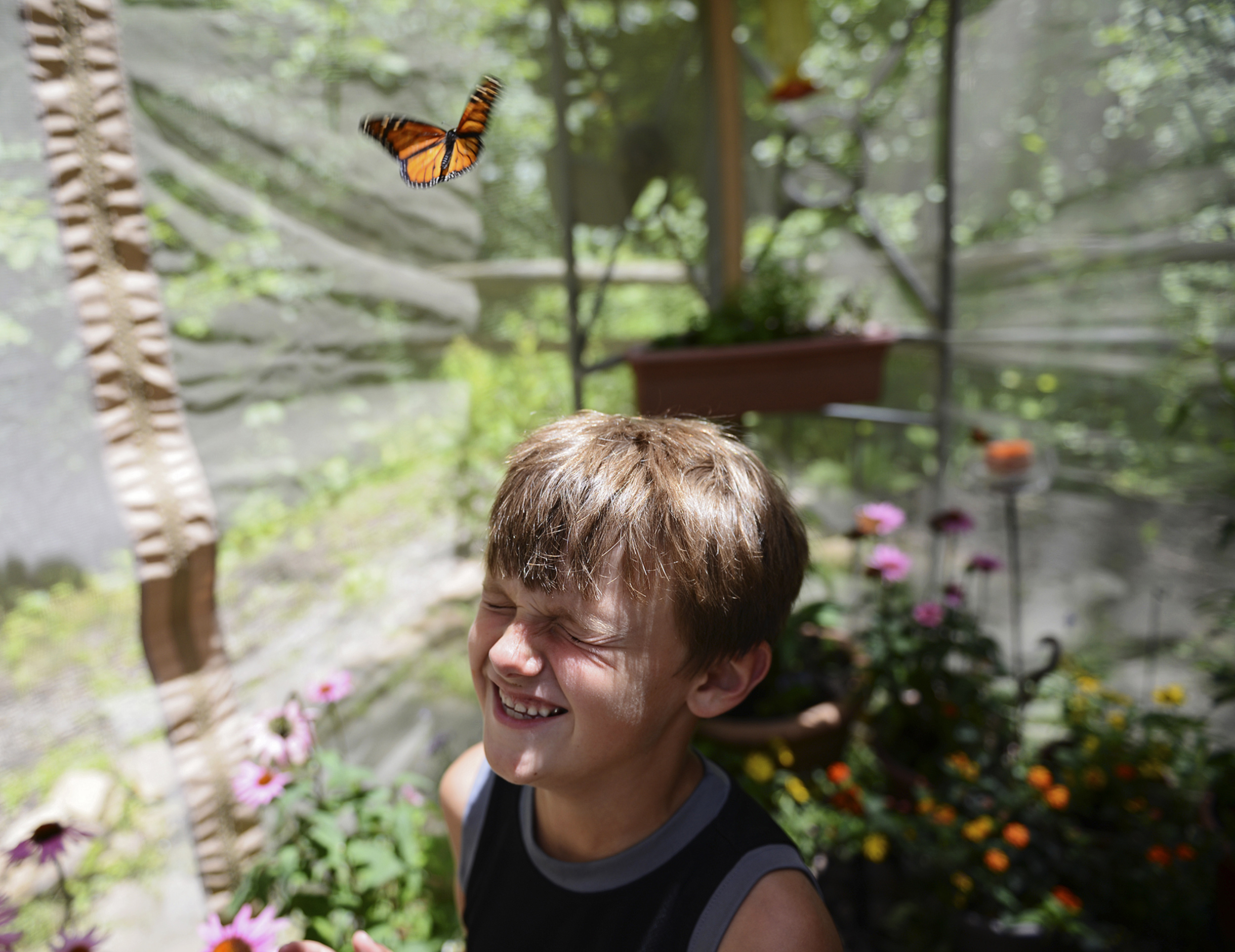 Jayden Jones, 7, of Westerville, laughs as a monarch takes flight from his nose in a butterfly tent outside of the Blendon Woods Metro Park nature center, in Westerville, Ohio, Saturday, July 5, 2014.