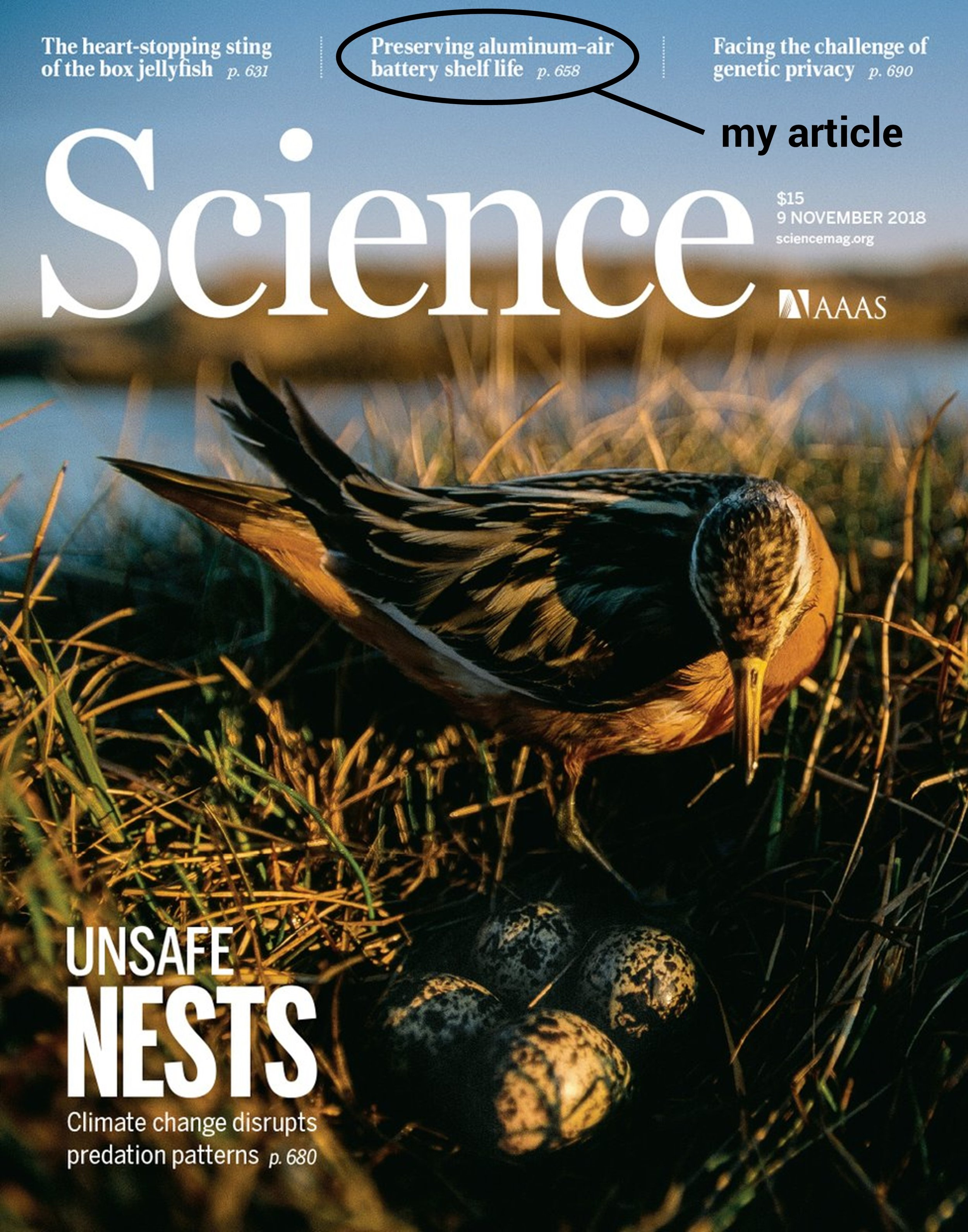 My article spotlighted on the front cover of  Science .
