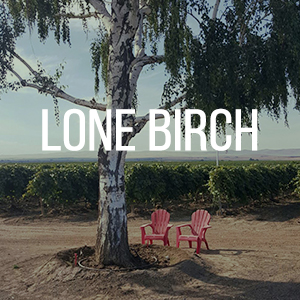 lonebirch.jpg