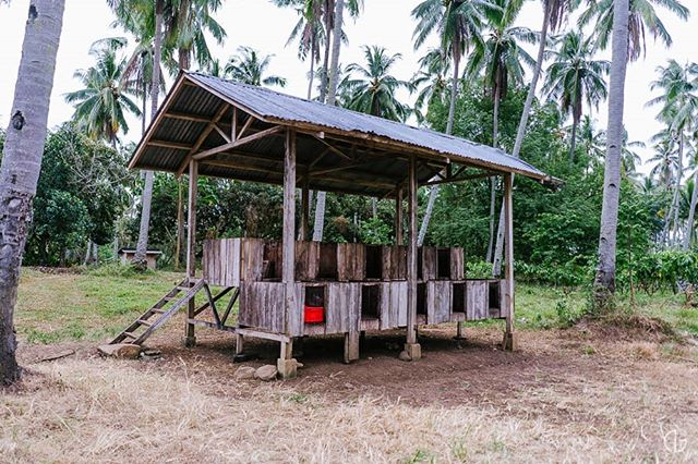 Fermentation Box.  #Cacao #Chocolate #Farm #Plantation #Davao #Philippines #Photography #NicholaiGoPhotography