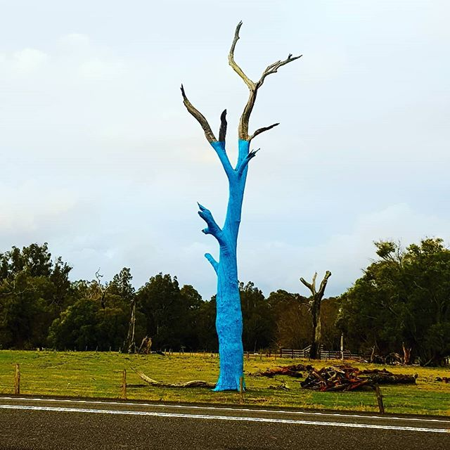 #RUOK ? I have been watching this tree get painted on my drives to work and back and it gives me such a bold and gentle reminder to check on myself,  my friends and family and also my work mates! Thank you Denise @quirkyden and Lochie for doing such amazing work 💙  #youcantalk #blutreeproject #itsoktonotbeok