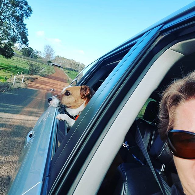 Decided to take a companion on my travels today - he sure did enjoy getting out and about 🐾 #cideryfurbabies #custardcofreshness #glutenfree