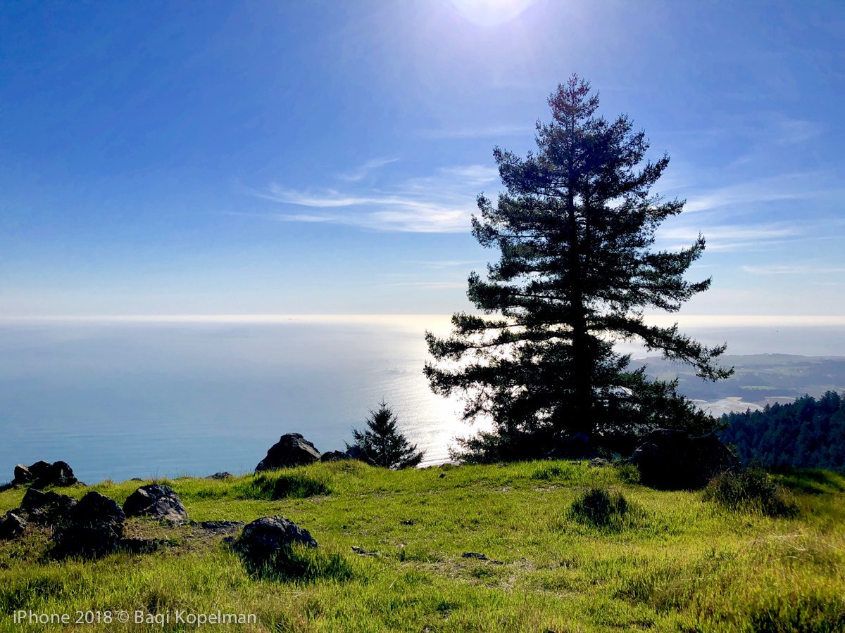 Phone Photography and Mt. Tam Walk -