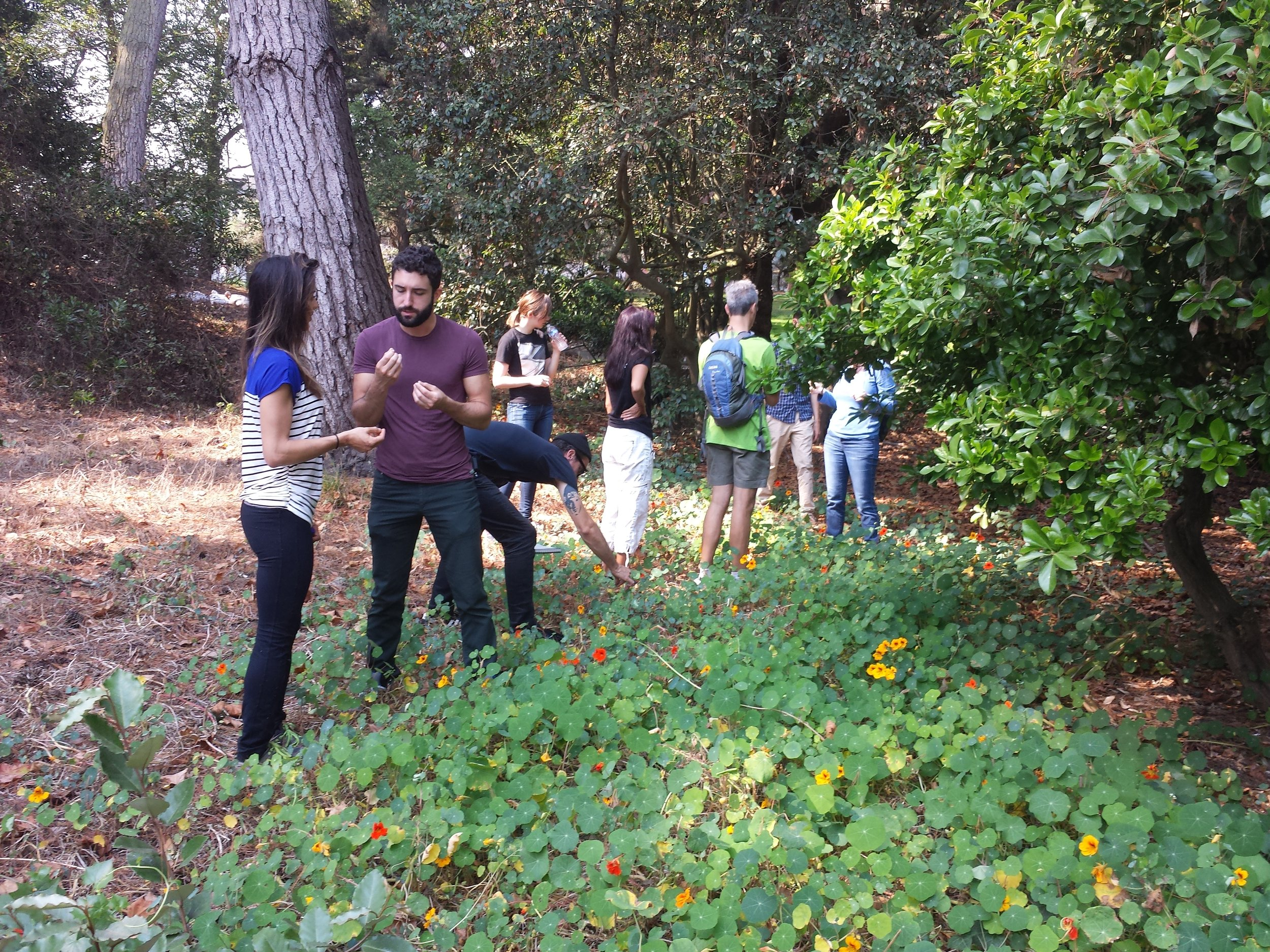 people nasturtium foraging.jpg