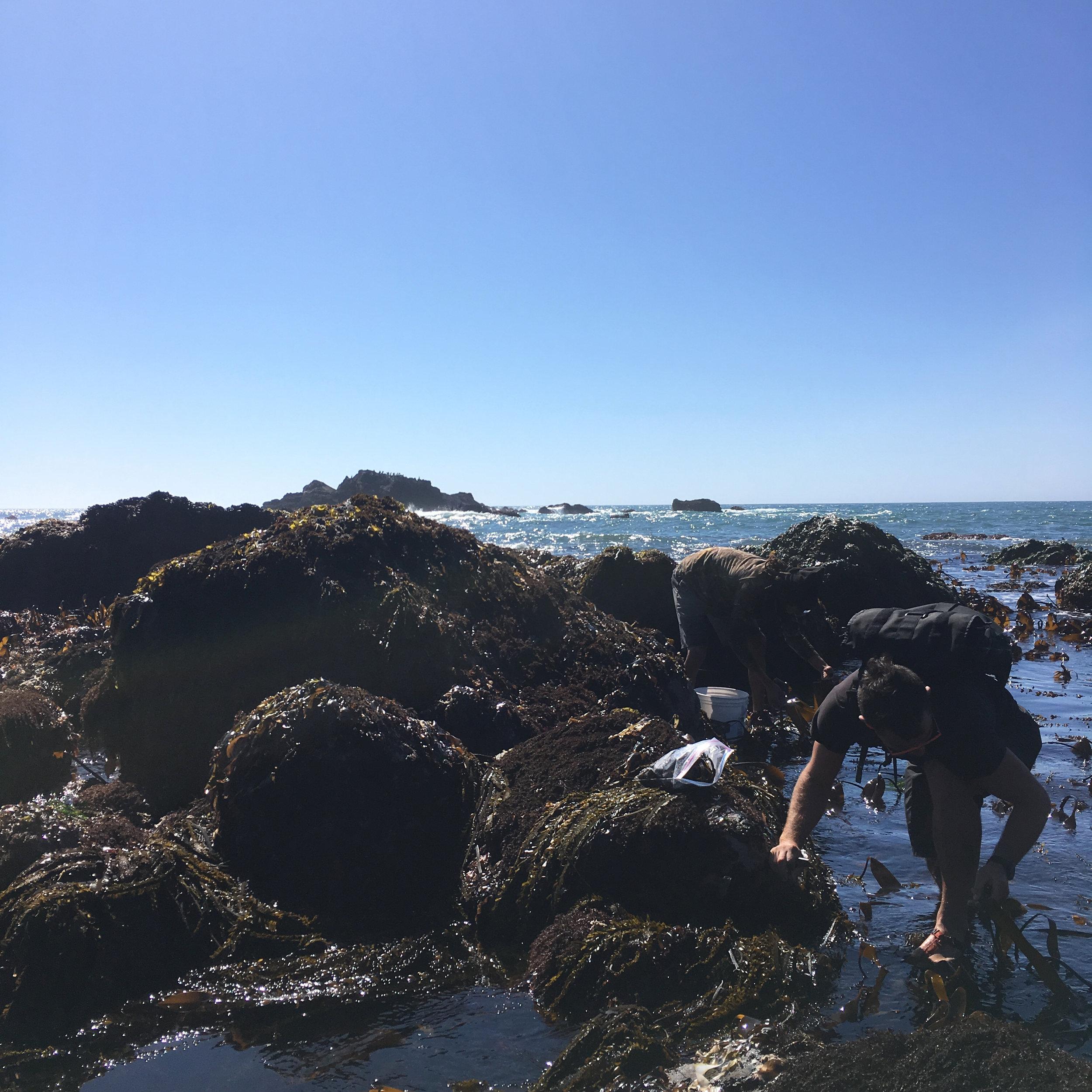 seaweed alternate.jpg