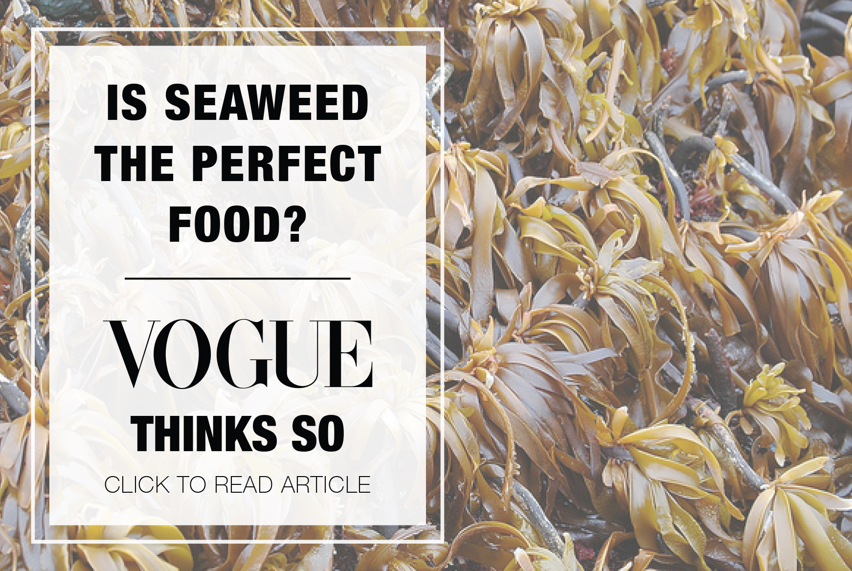 seaweed_article_img.jpg