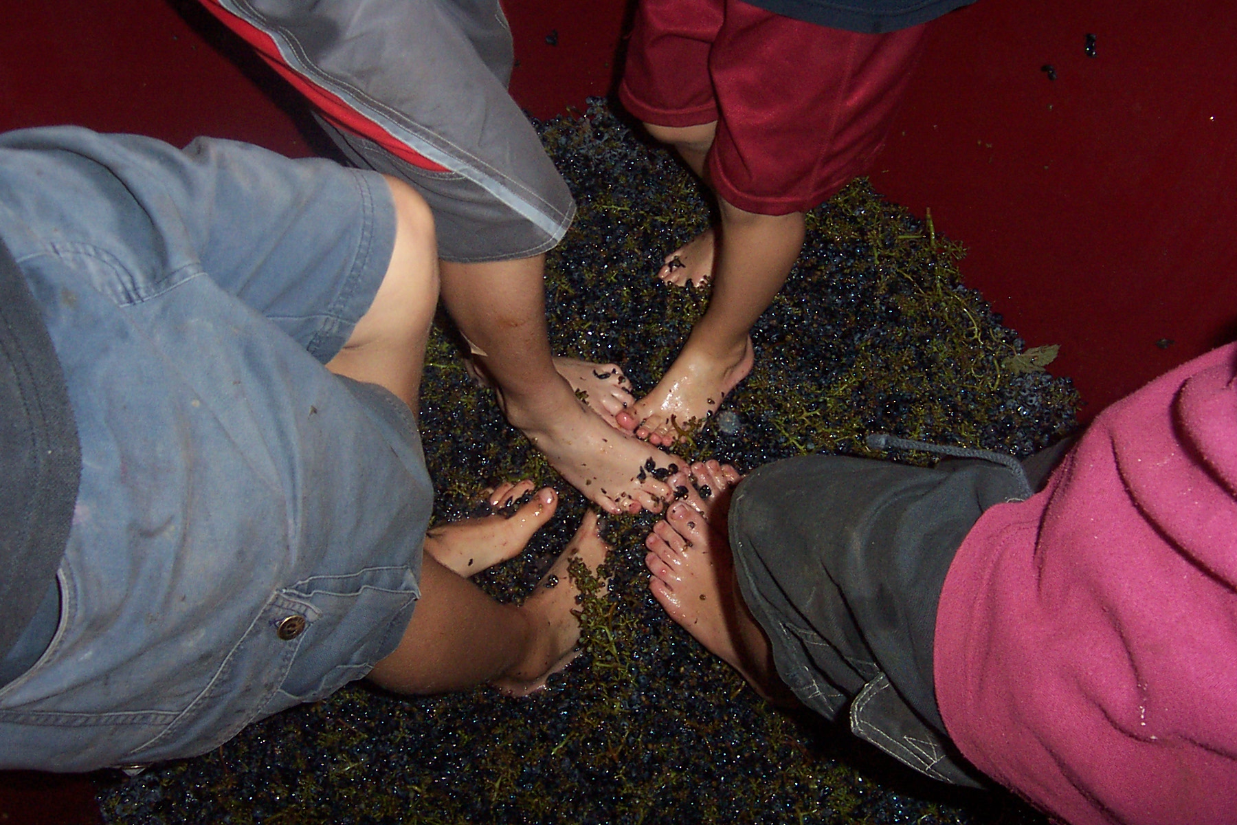 Winery kids foot stomp