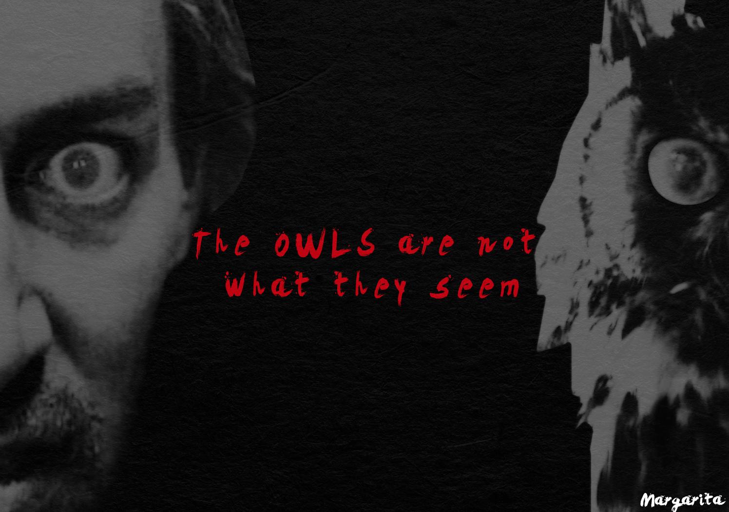 owls cardboard.png