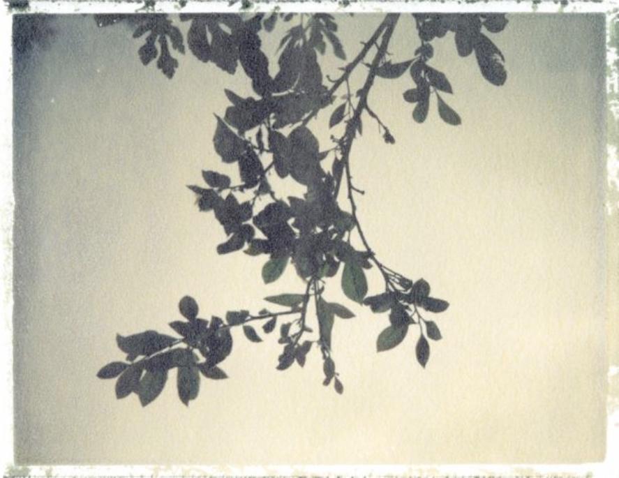 fine art polaroid transfer emma j starr analogue photographer