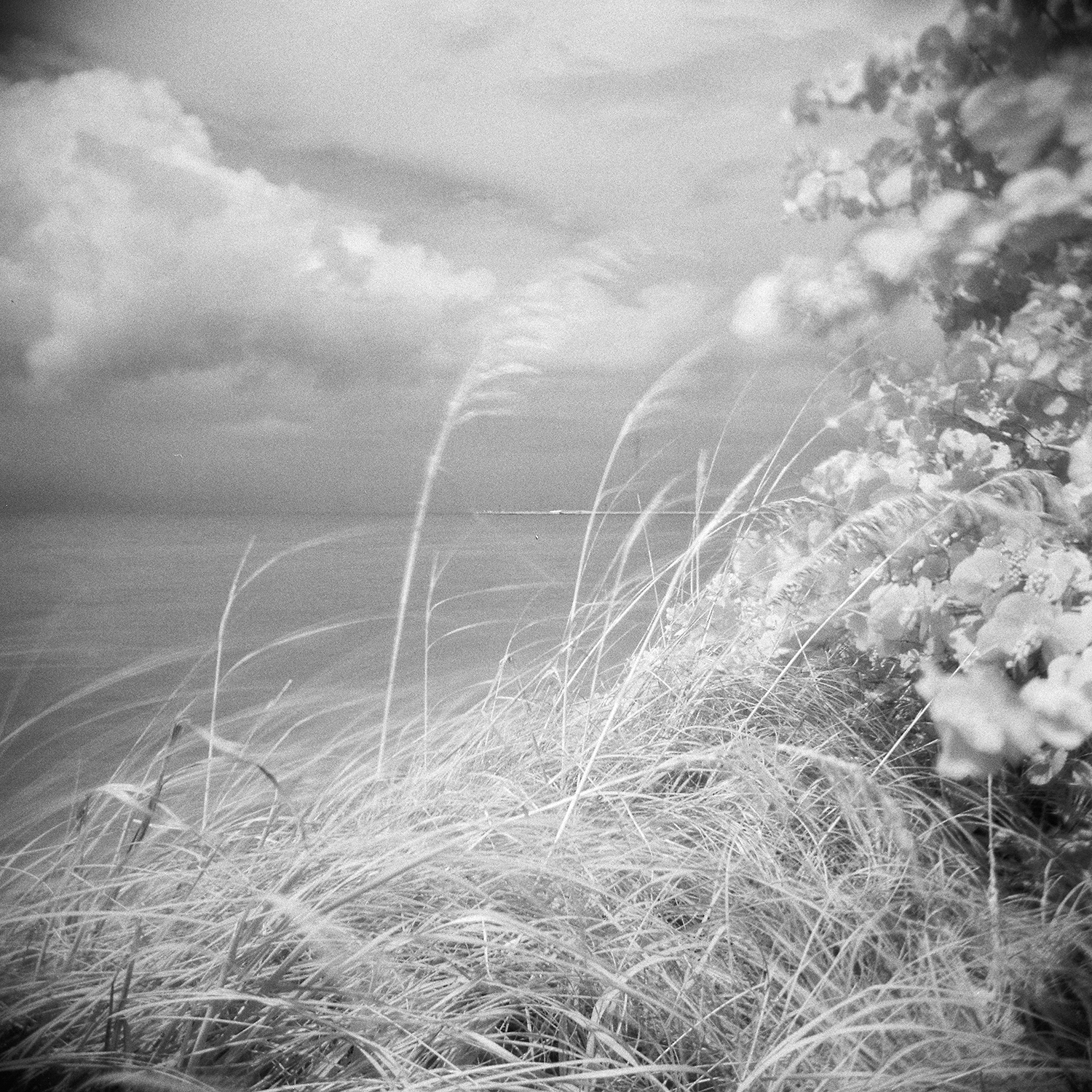emma jay starr photography analogue infrared film key west .jpg